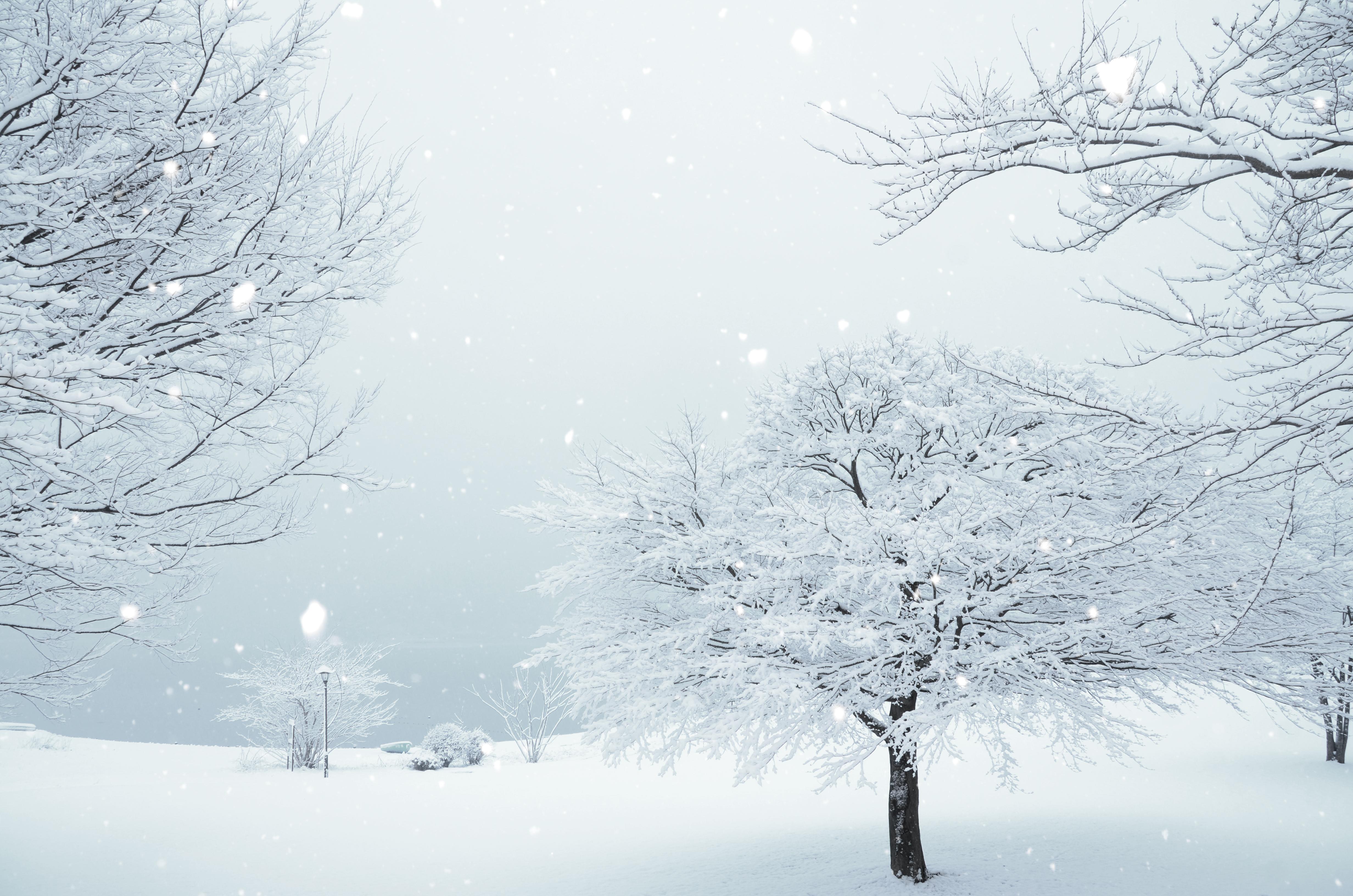 大雪の被害と備え
